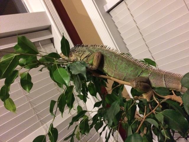 Sarah S Bearded Dragon Rescue Tree Bed