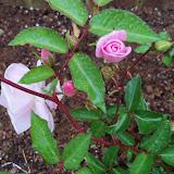 Gardening 2010 - 101_0513.JPG