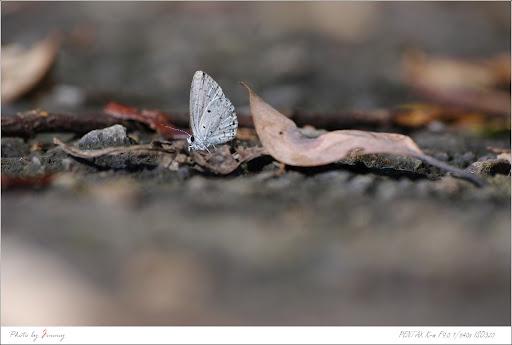 第一次拍蝴蝶好有趣