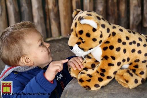 cheetahs vieren hun eerste verjaardag Zoo Parc Overloon (8) 11-11-2012.JPG
