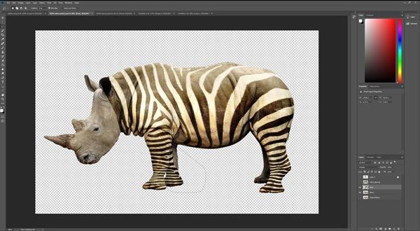 zebra8