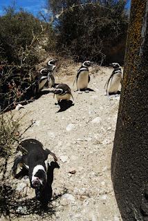 Biologistes_et_pingouins_16