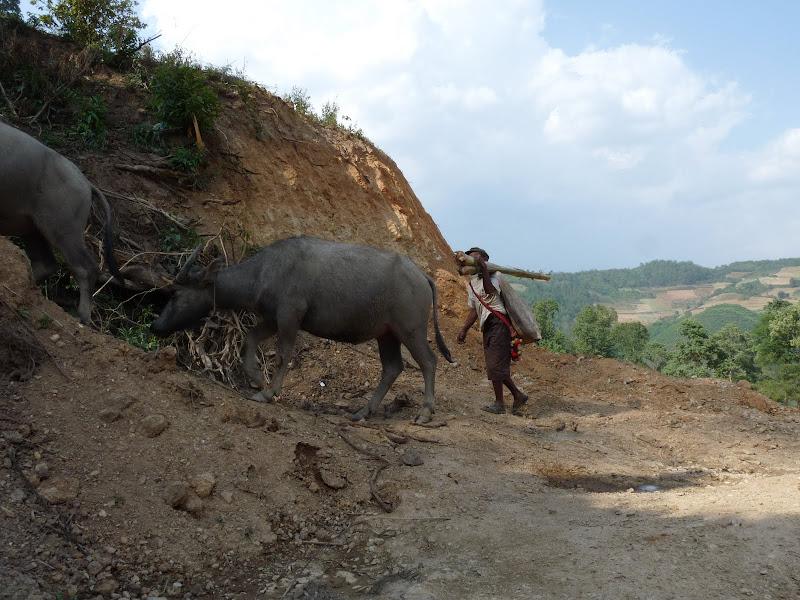 Chine .Yunnan,Menglian ,Tenchong, He shun, Chongning B - Picture%2B540.jpg