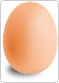 คำศัพท์ภาษาอังกฤษไข่