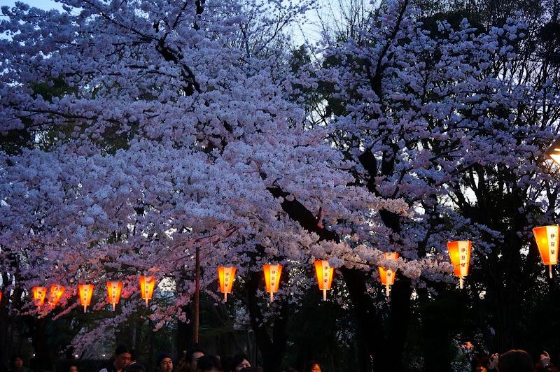 2014 Japan - Dag 1 - britt-DSC03325-0010.JPG