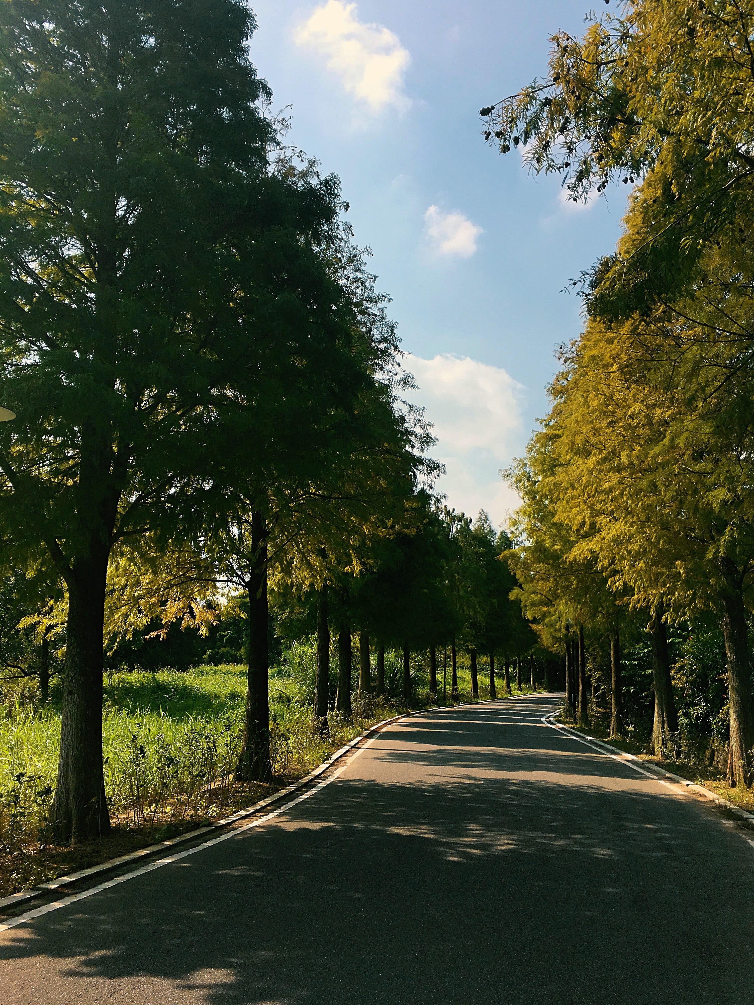 Daxi bald pine  avenue taoyuan Taiwan
