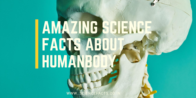 Amazing Science Facts about Human Body