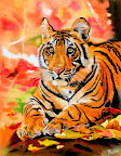 Le Tigre 65 x 75  Avril 2006
