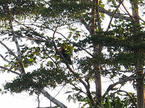 Photo: Another type of Hornbill