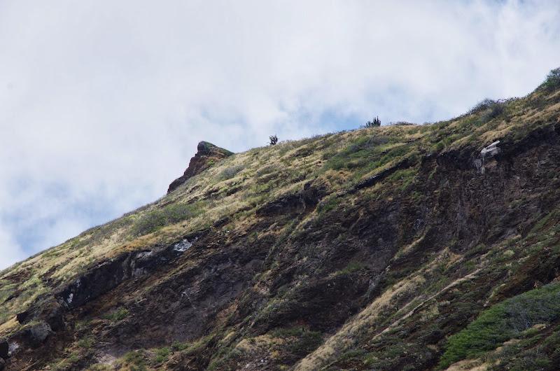 06-19-13 Hanauma Bay, Waikiki - IMGP7515.JPG