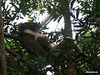 Chiller Koala 3