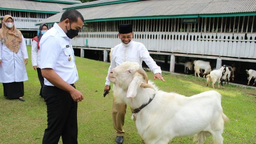 Wagub Sumbar Tinjau Agro Wisata Boncah Farm Kambing Etawa