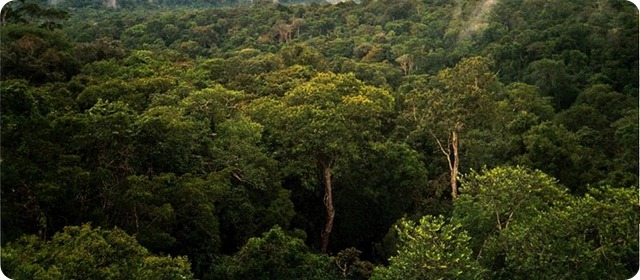 Biodiversity-Amazon_Manaus_forest