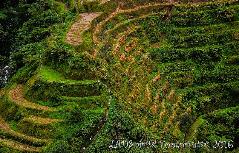 The steps and the trekkers at Banaue Rice Terraces