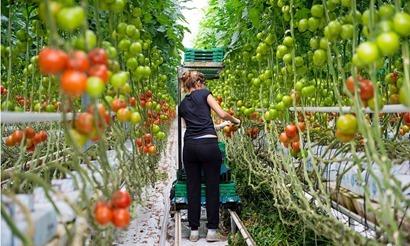 Pflanzenpatente_ddc626c7e8