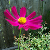 Gardening 2010, Part Three - 101_5083.JPG