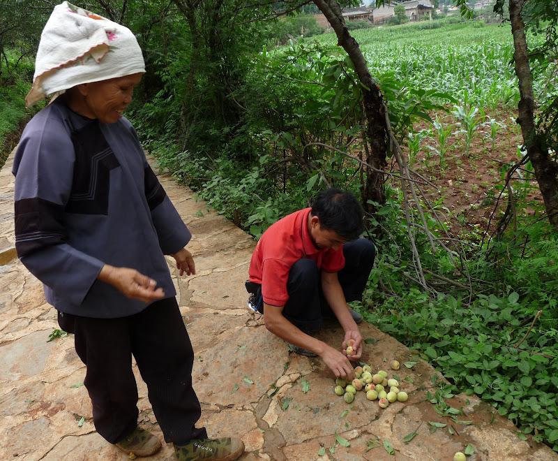Chine . Yunnan BA MEI 2 - P1260989.JPG