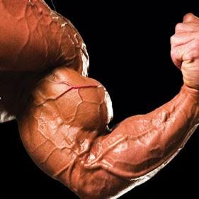 musclefan92103