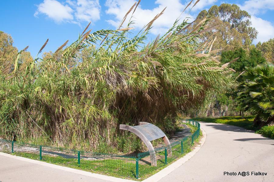 Парк Яркон. Очистка воды с использованием моделей природных систем. Экскурсия по реке Яркон в Тель Авиве и Яффо. Гид в Израиле Светлана Фиалкова.