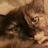 charlotte kidwell avatar image