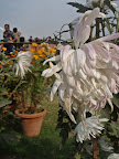 white_flower.JPG