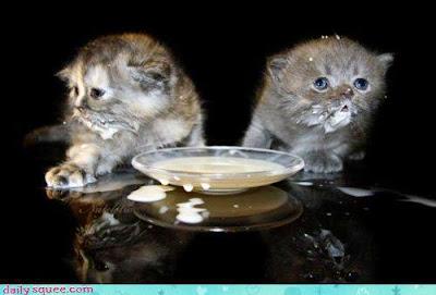 kittens%2Bdrinking%2Bmilk.jpg
