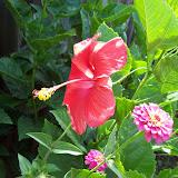 Gardening 2009 - 101_5033.JPG