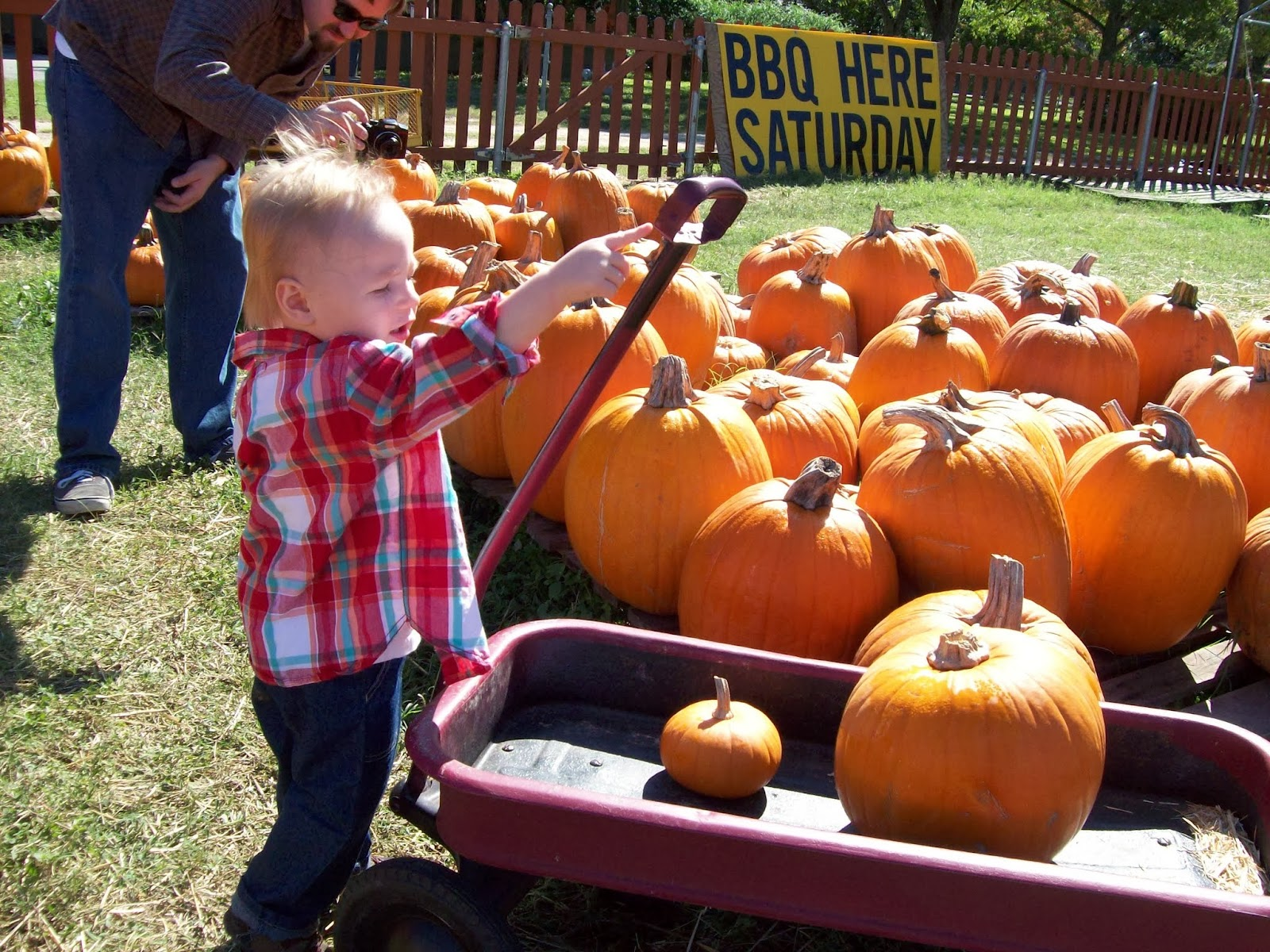 Pumpkin Patch - 114_6565.JPG