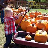 Pumpkin Patch - 114_6565.JPG