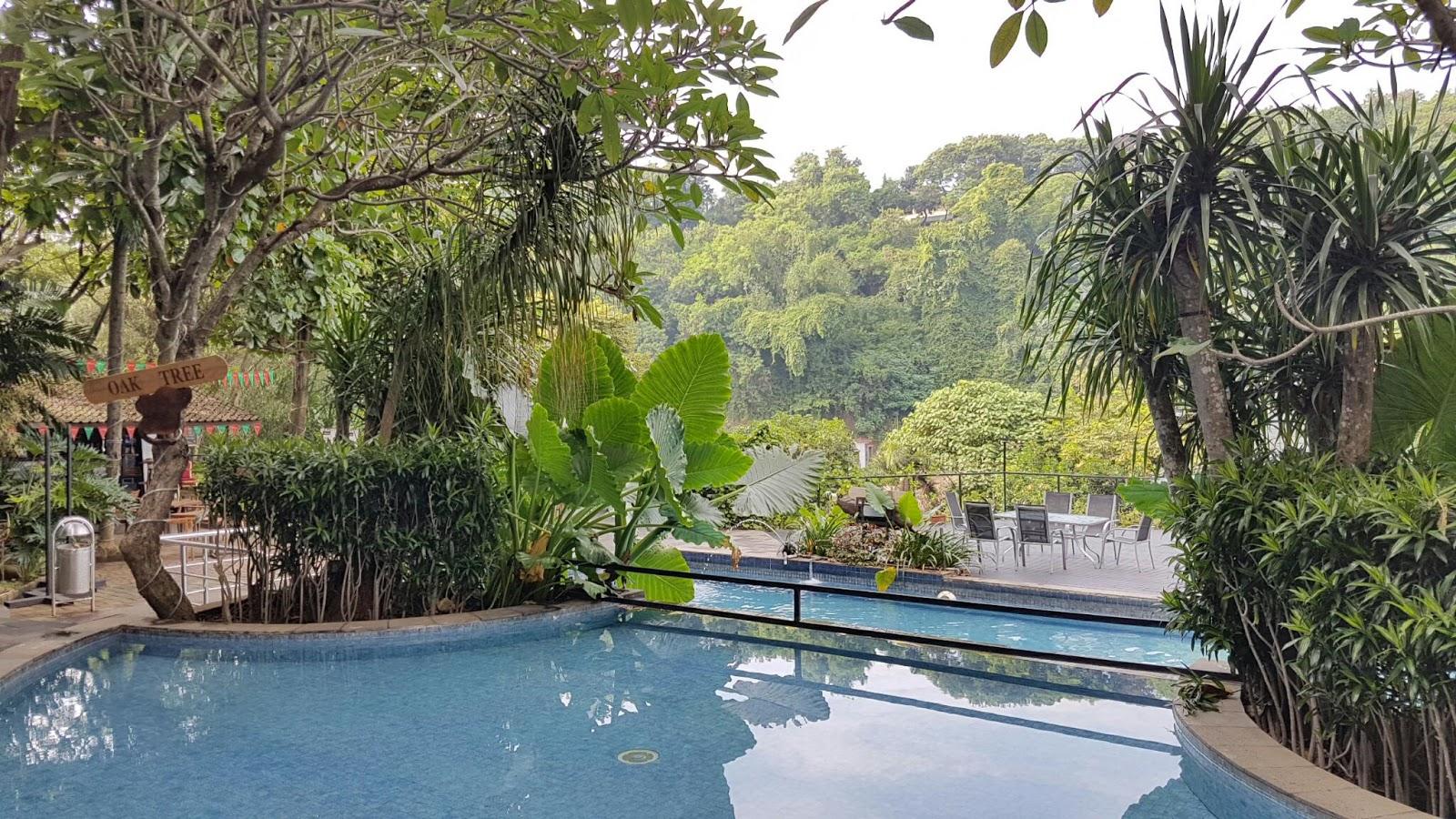 The Lost Wanderer Review Hotel Oak Tree Emerald Semarang
