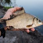20150703_Fishing_Virlia_007.jpg