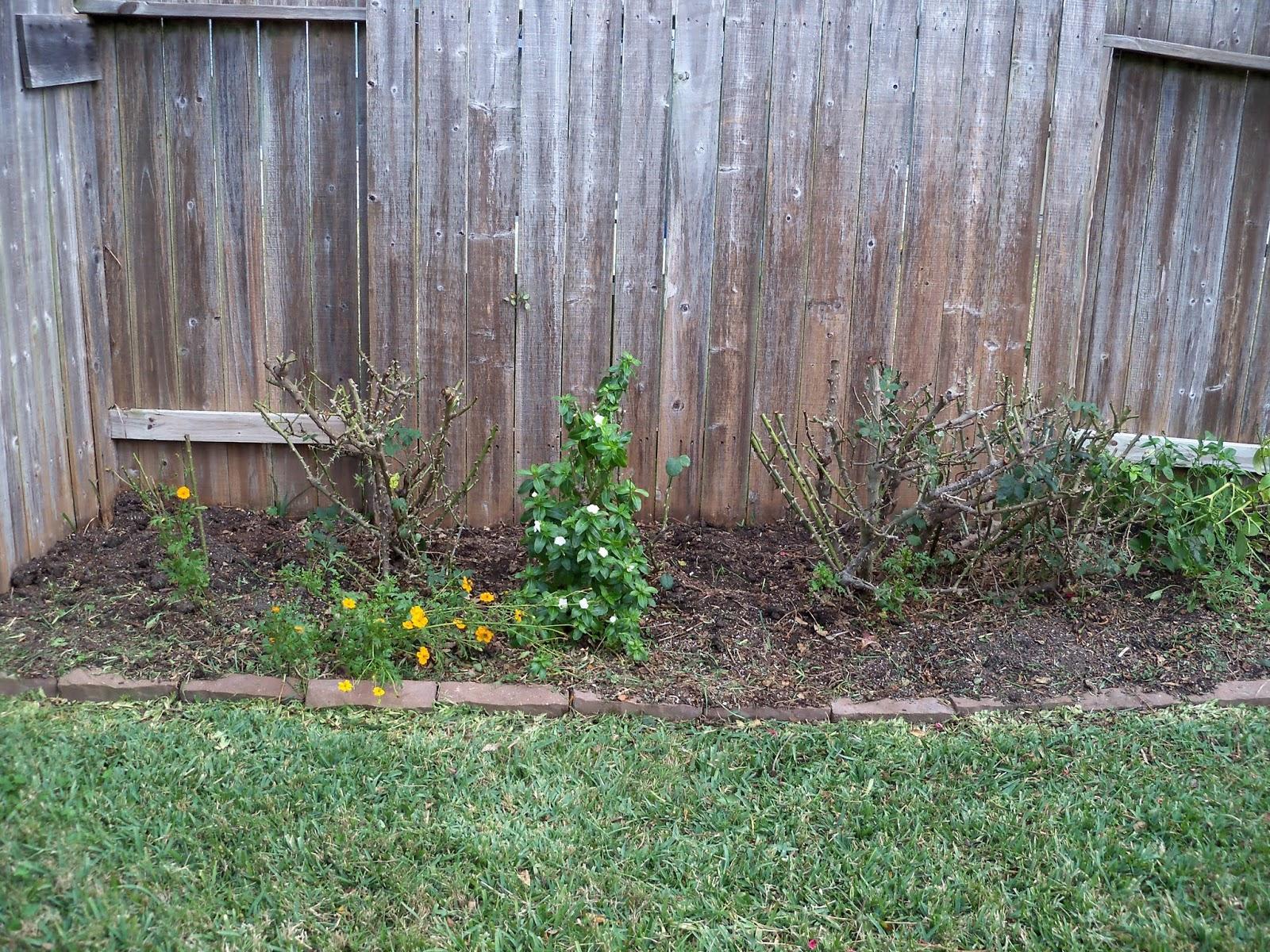 Gardening 2013 - 115_5118.JPG