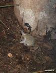 Irgendein kleines Mäusle