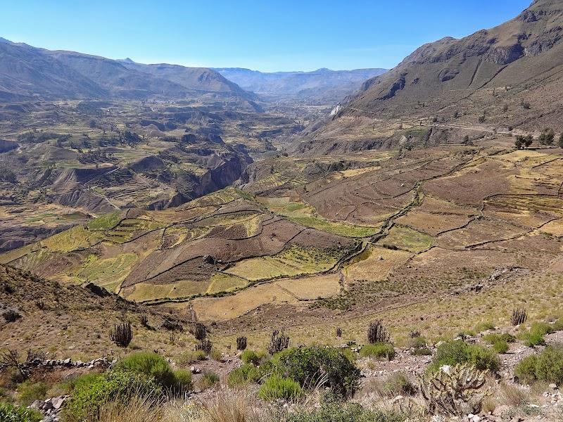 Słynny kanion Colca w Peru.JPG