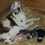 Thelma's litter @ 5 days