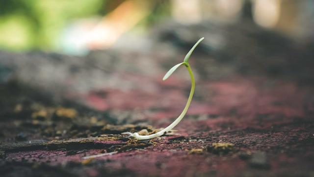 sapling-new-beginning-yuktix