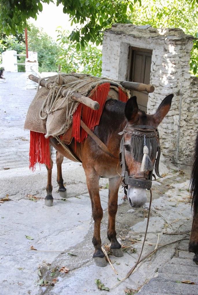 Nono's mulo