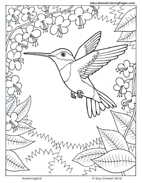 Difficult Hummingbird Coloring Page For Older Kids