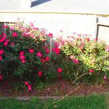 Gardening 2015 - 116_7682.JPG