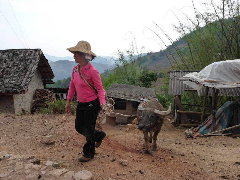 Chine . Yunnan..Galamba, Menglian Album A - Picture%2B459.jpg