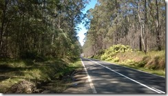 Roadside forest, NSW
