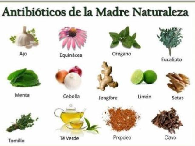 Todo holistico una expansi n del ser 15 plantas for Tipos de hierbas medicinales