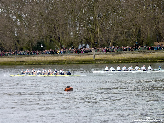 regata-oxford-cambridge.JPG