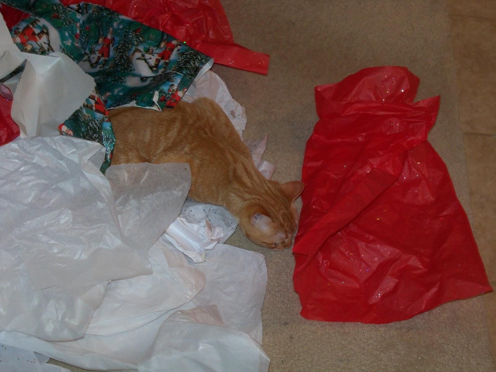 Christmas 2010 - 100_6420.JPG