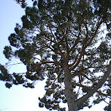 Sortida Sant Salvador de les espasses 2006 - CIMG8444.JPG