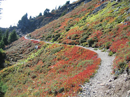 Trail to Winchester... blueberry shrubs turning red.