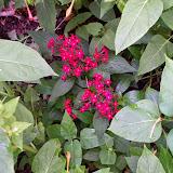 Gardening 2014 - 116_2591.JPG