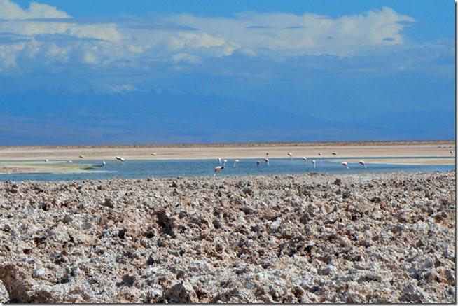 Laguna-Chaxa-Flamingos-Atacama