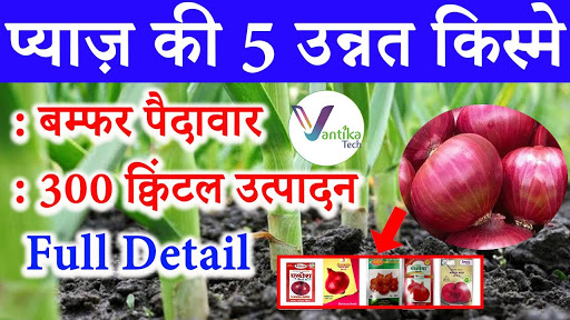 Best onion Variety | Hybrid Onion | Panchganga | Ellora | Prashant | Pyaz | Onion