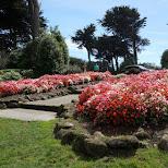 dutchmill in golden gate park in San Francisco, California, United States
